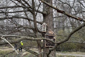 Opiskelijoiden rakentamia hyönteishotelleja puihin sijoitettuna.